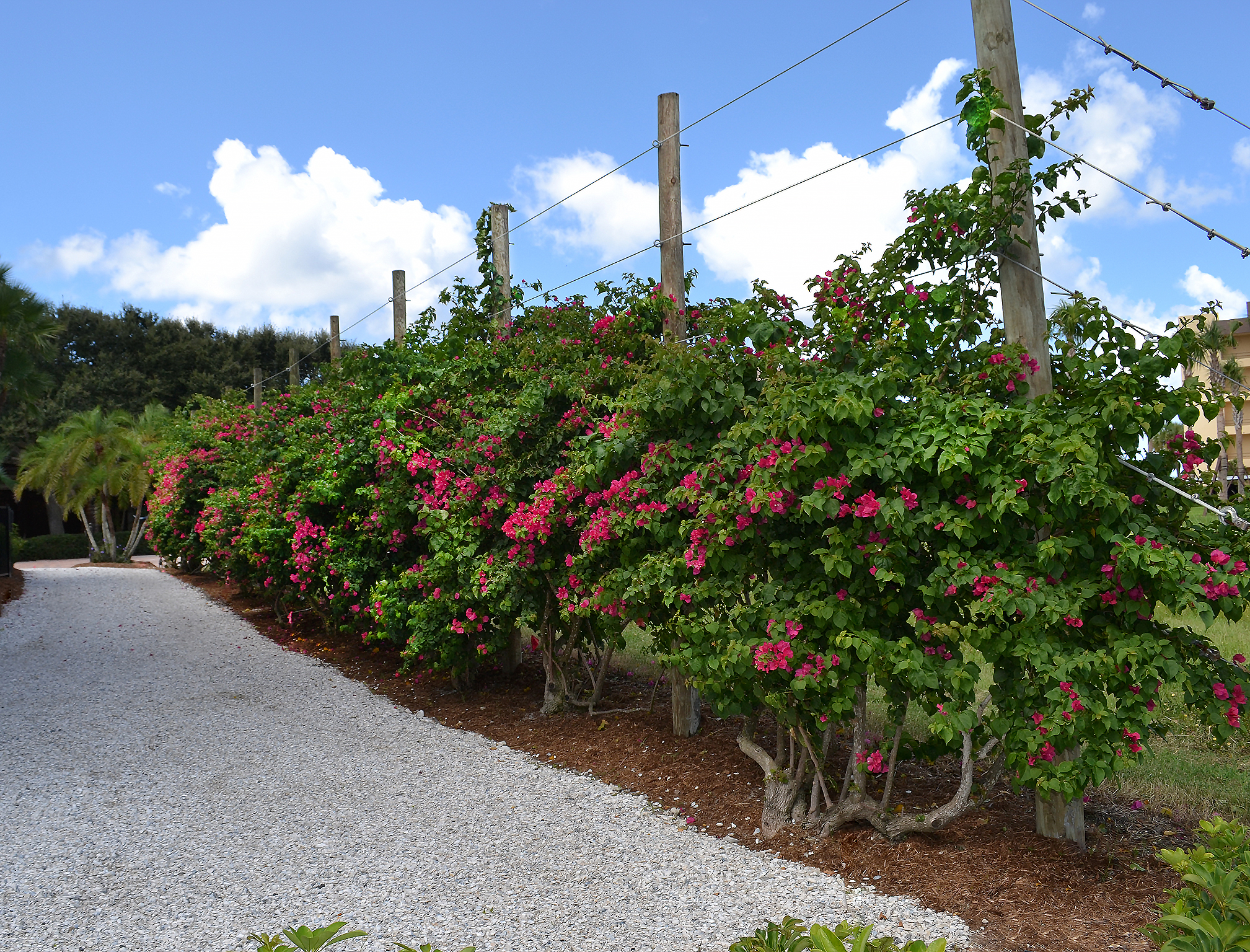 botanical solutions fence trellis